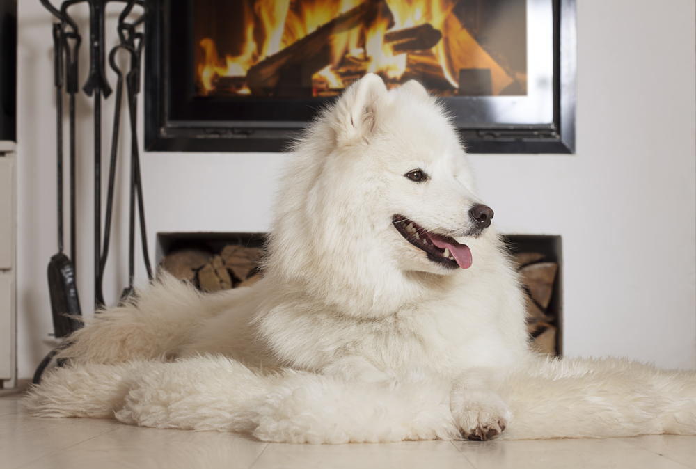 Enjoy Some Pet Safe Fireplace Time