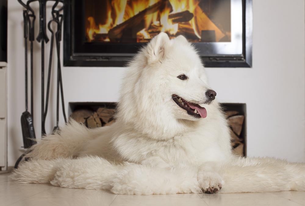 Enjoy Some Pet Safe Fireplace Time